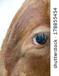 in this close up of an ox eye ... | Shutterstock . vector #178855454