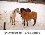 This Is A View Of Horses At...