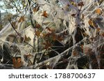 Autumn Bush Decorated With...