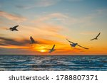Seagulls In Flight Over Sea At...
