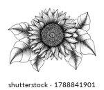 vintage sunflower illustration  ... | Shutterstock . vector #1788841901