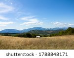 A White Horse Grazing On A...