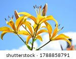 yellow flowers and blue sky | Shutterstock . vector #1788858791