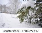 green tree in white snow in the ... | Shutterstock . vector #1788892547