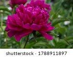 bright purple flower on green... | Shutterstock . vector #1788911897