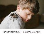 Tarantula Spider On Boy\'s...