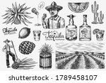 tequila bottle  shot with lime  ... | Shutterstock .eps vector #1789458107