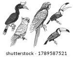 Set Of Tropical Birds. Toucans  ...