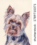 Yorkshire Terrier Dog Breed....