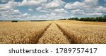 Panoramic View Of A Wheat Field ...