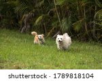 Two Dogs Playing  Including A...