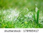 sparkly snowdrop flower  very... | Shutterstock . vector #178985417