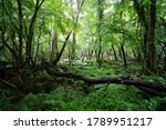 Fallen Tree And Ferns In A...