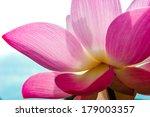 Close Up Of Blossom Pink Lotus...