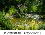 Beautiful Garden Pond With...