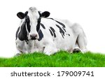 Cow On Meadow Isolated On White