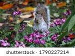 Cute Squirrel In Autumn Park....