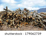 Pile of Fresh Cut Timber at a Sawmill - stock photo