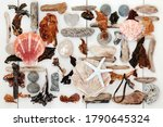 Driftwood  Shell  Seaweed And...