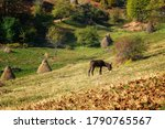 Amazing Autumn View With A...