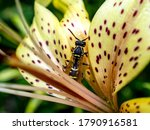 Dangerous Wasp Sitting On A...