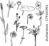 set of line drawing herbs  hand ... | Shutterstock .eps vector #179101901