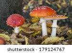 Three Amanita Muscaria Or Fly...