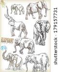 elephant vector sett | Shutterstock .eps vector #179157731