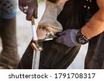 Small photo of Horse farrier at work - trims and shapes a horse's hooves and hammering a horseshoe to a horse's hoof. The close-up of horse hoof, nail and hammer.