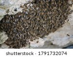 Feral Bee Hive On A Cliff Face...