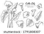 calla lily flower and leaf hand ... | Shutterstock .eps vector #1791808307