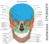 the bones of the head  skull... | Shutterstock .eps vector #1791846374