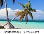 palm tree. | Shutterstock . vector #179188595
