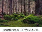 Mossy Forest View. Wilderness...