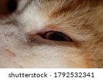 The Macro Photograph Shows The...