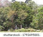 Small photo of La foret est un vrai plaisir. La foret ivoirienne est en etroite liaison avec la situation geographique du pays. Celle-ci determine la nature du massif forestier, son importance et sa signification