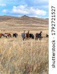 Wild Horses On The Prairie...