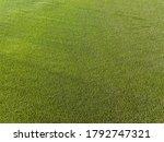 Green Cornfield In Ukraine....