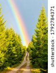 forest country road leading to... | Shutterstock . vector #1792784371