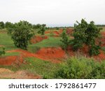 Red Soil  Sand In A Canyon ...
