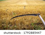 Rustic Scythe In A Harvested...