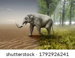 Elephant Crossed From Sunny...