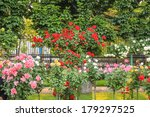 Stock photo bushes of roses that bloom in the summer garden 179297525