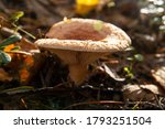 The Orange Mushroom A Coral...