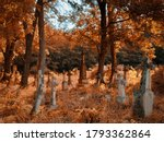 Old abandoned cemetery on a...