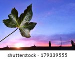 Ivy Leaf Sunset Urban Background