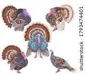 Set Of Vector Turkeys In A...