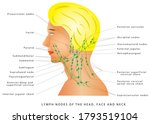 lymphatic drainage. lymph nodes ... | Shutterstock .eps vector #1793519104