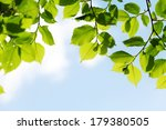 Green Leaves On Blue Sky...