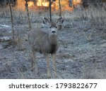 A Young Buck Listens...